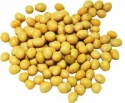 export yellow soybeans product - product's photo