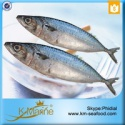 competitive prices land frozen mackerel fish benefits - product's photo