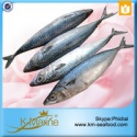 frozen sefood mackerel fish sale - product's photo