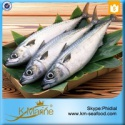 block frozen japanese mackerel fish - product's photo