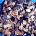 iqf frozen boletus edulis whole or halve or cubes - product's photo