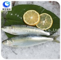 a grade qaulity sea frozen sardine - product's photo