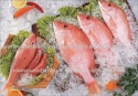 frozen red mullet sea fish - product's photo
