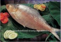 high quality sea water whole frozen fish - product's photo