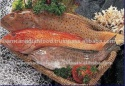 sea water fresh frozen fish - product's photo