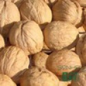 wholesale cheap price wide dried walnuts in shell - product's photo