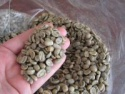 arabica green coffee beans - product's photo