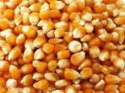 yellow corn - product's photo