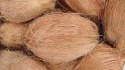 fresh indian semi husked coconut - product's photo