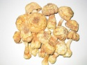 dried agaricus subrufescens - product's photo