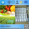 china fresh garlic - product's photo