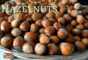 wholesale hazelnut without shell for sale at very good prices - product's photo