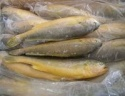 frozen big mouth silver & yellow croaker fish - product's photo