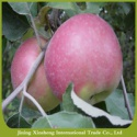 apple fruit specification - product's photo