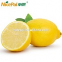 instant yellow lemon juice powder extract from organic fruit - product's photo