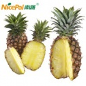 natural spray dried fresh pineapple fruit beverage powder - product's photo