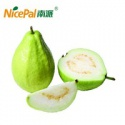 natural spray dried fresh guava fruit beverage powder - product's photo