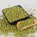 green mung bean production - product's photo