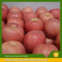 china fresh fruits red delicious fuji apples - product's photo
