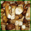 wild raw iqf porcini mushroom quarter slice - product's photo