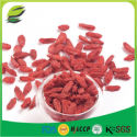 bache di goji fruit seed - product's photo
