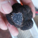wild fresh black mushroom truffle - product's photo