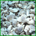 hot sales frozen oyster mushroom whole - product's photo