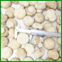 compotitive prcie cultivated frozen champignon whole - product's photo