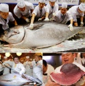 the asean countries are increasing imports of tuna - news on Buy-foods.com