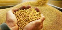 in january 2017 the key exporters of soybean oil have reduced shipments - news on Buy-foods.com
