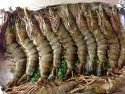 vietnamese shrimp exports slowed at the beginning of the year - news on Buy-foods.com